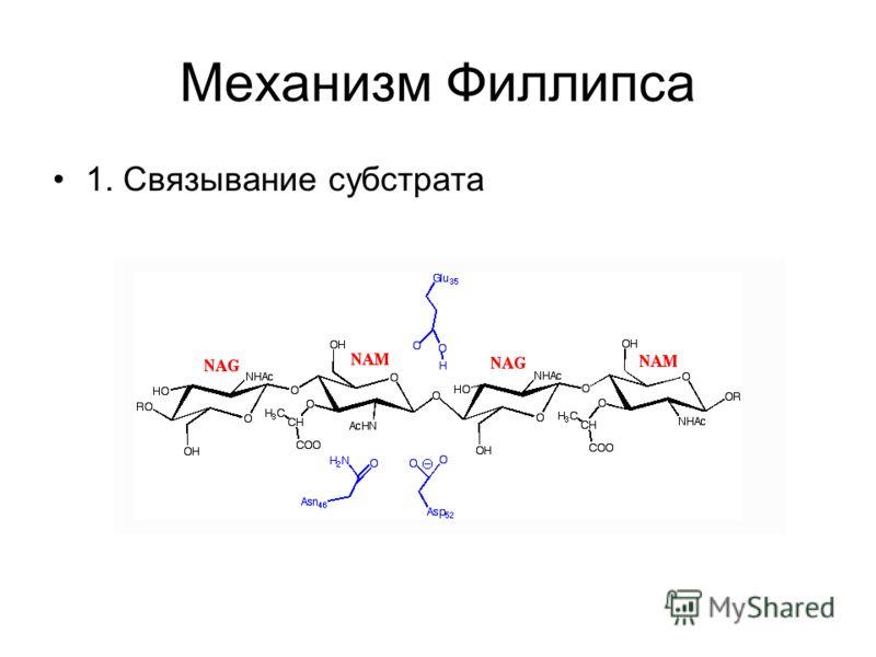 Механизм Филлипса 1. Связывание субстрата