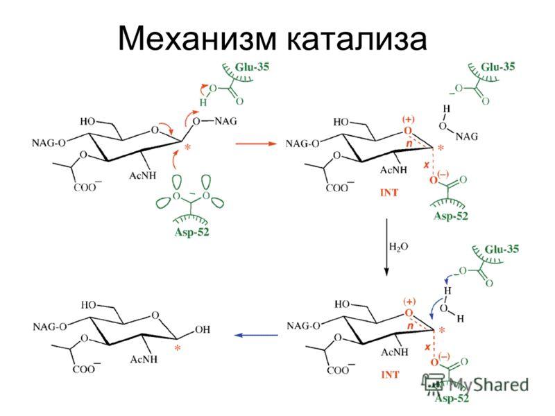 Механизм катализа
