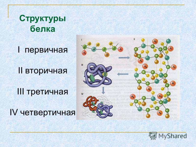Структуры белка I первичная II вторичная III третичная IV четвертичная