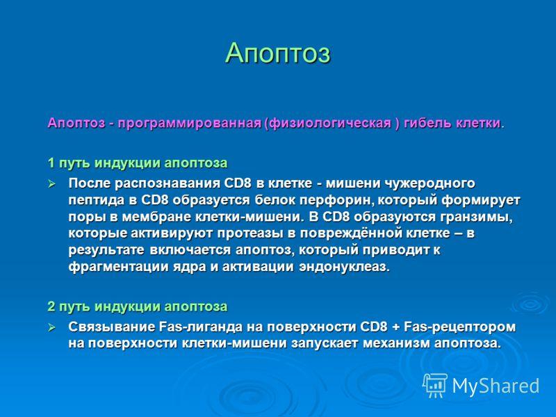 Апоптоз Апоптоз - программированная (физиологическая ) гибель клетки. 1 путь индукции апоптоза После распознавания CD8 в клетке - мишени чужеродного пептида в CD8 образуется белок перфорин, который формирует поры в мембране клетки-мишени. В CD8 образ