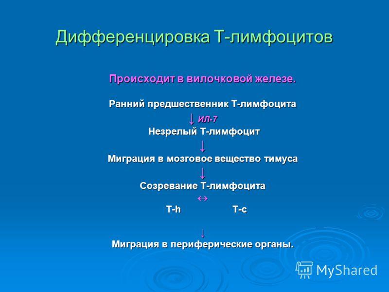 Дифференцировка Т-лимфоцитов Происходит в вилочковой железе. Ранний предшественник Т-лимфоцита ИЛ-7 ИЛ-7 Незрелый Т-лимфоцит Незрелый Т-лимфоцит Миграция в мозговое вещество тимуса Созревание Т-лимфоцита Т-h T-c Т-h T-c Миграция в периферические орга