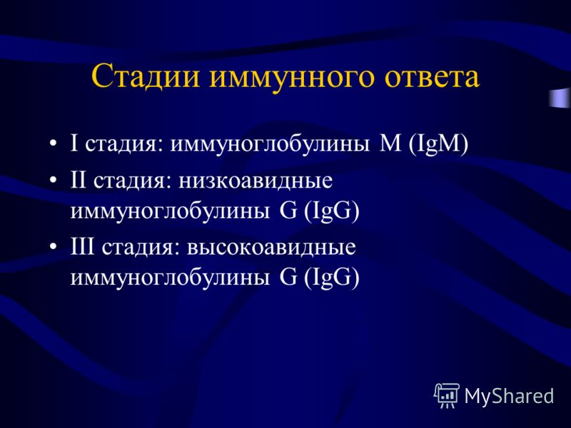 Стадии иммунного ответа I стадия: иммуноглобулины M (IgM) II стадия: низкоавидные иммуноглобулины G (IgG) III стадия: высокоавидные иммуноглобулины G (IgG)