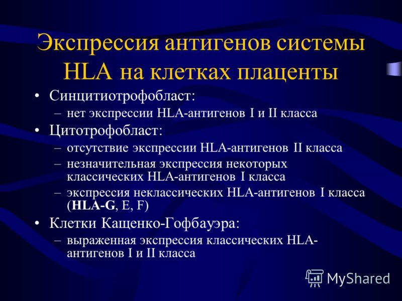 Экспрессия антигенов системы HLA на клетках плаценты Синцитиотрофобласт: –нет экспрессии HLA-антигенов I и II класса Цитотрофобласт: –отсутствие экспрессии HLA-антигенов II класса –незначительная экспрессия некоторых классических HLA-антигенов I клас