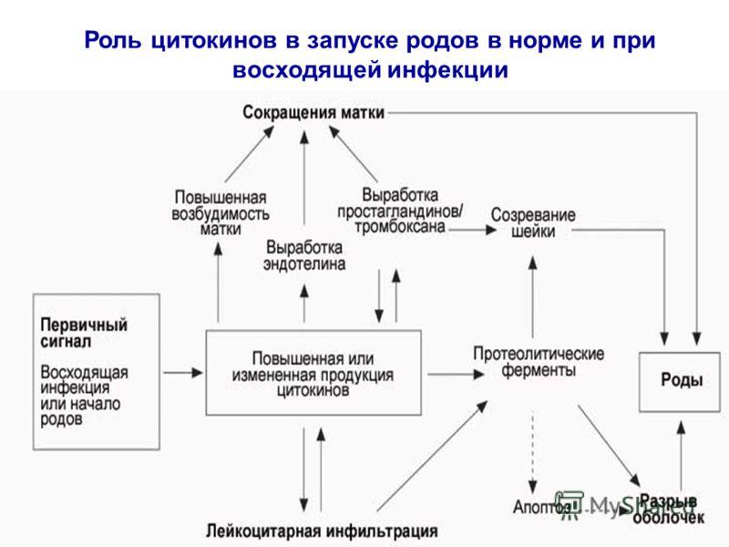 Роль цитокинов в запуске родов в норме и при восходящей инфекции