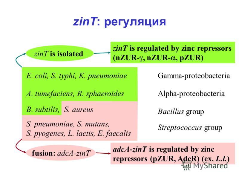 zinT: регуляция zinT is isolated fusion: adcA-zinT E. coli, S. typhi, K. pneumoniaeGamma-proteobacteria Alpha-proteobacteria B. subtilis, S. aureus S. pneumoniae, S. mutans, S. pyogenes, L. lactis, E. faecalis Bacillus group Streptococcus group zinT