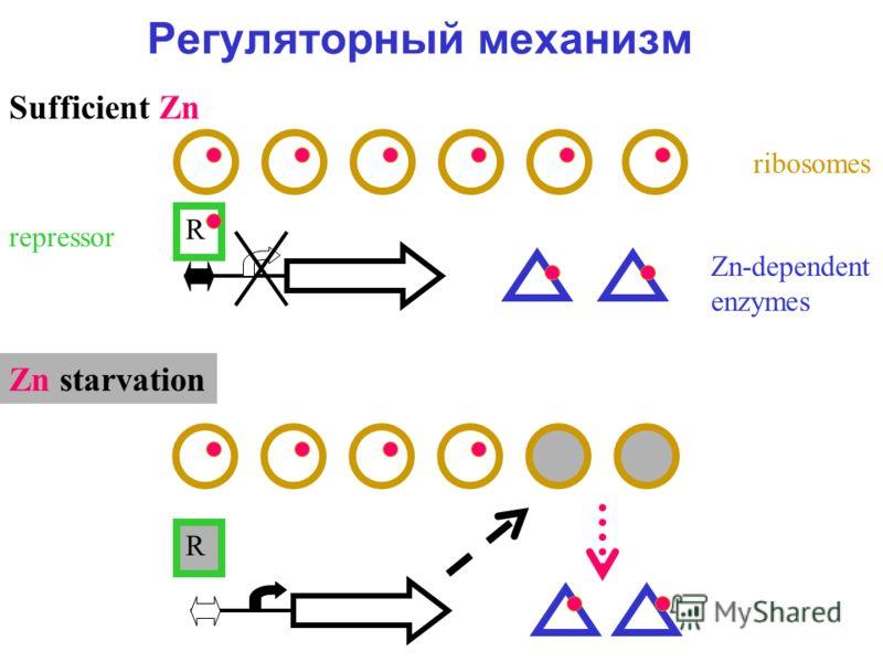 Регуляторный механизм ribosomes Zn-dependent enzymes R Sufficient Zn Zn starvation R repressor