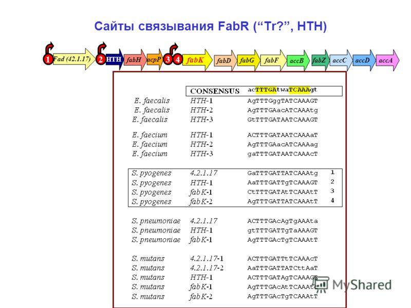 Сайты связывания FabR (Tr?, HTH) HTH fabK fabH acpP fabGfabFaccAaccDaccC accB fabZ fabD Fad (42.1.17) 1234