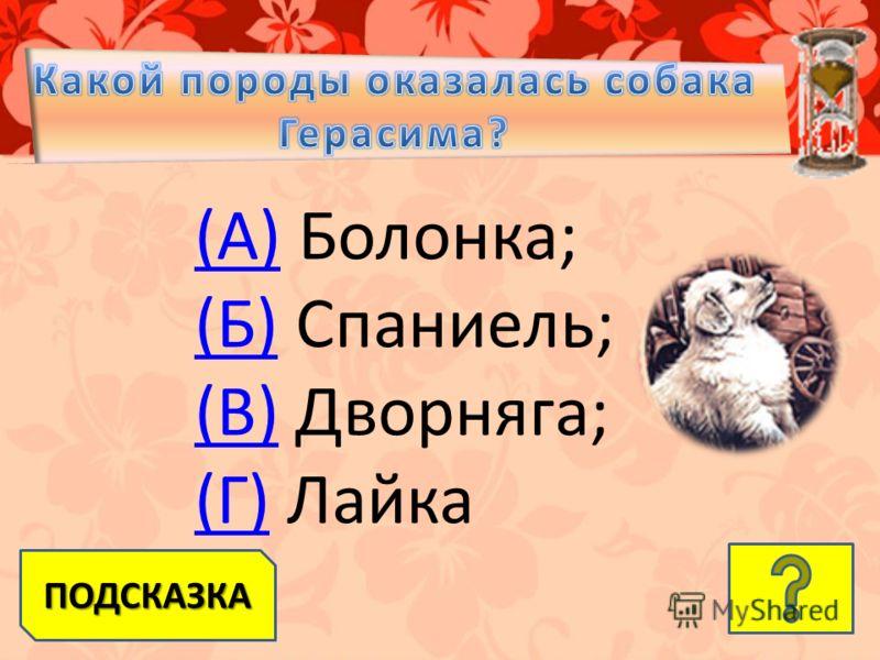 (А)(А) Болонка; (Б)(Б) Спаниель; (В)(В) Дворняга; (Г)(Г) Лайка ПОДСКАЗКА