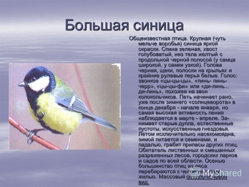 Большая синица Общеизвестная птица. Крупная (чуть мельче воробья) синица яркой окраски. Спина зеленая, хвост голубоватый, низ тела желтый с продольной черной полосой (у самца широкой, у самки узкой). Голова черная, щеки, полоски на крыльях и крайни