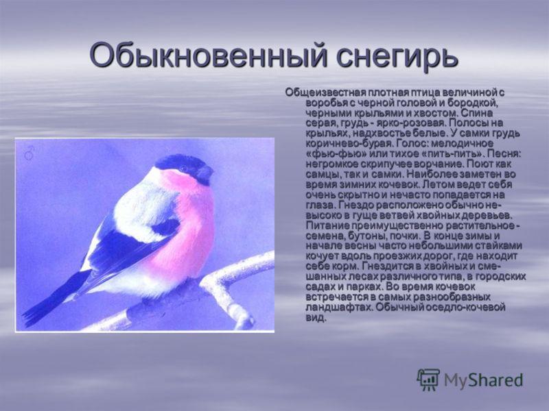 Обыкновенный снегирь Общеизвестная плотная птица величиной с воробья с черной головой и бородкой, черными крыльями и хвостом. Спина серая, грудь - ярко-розовая. Полосы на крыльях, надхвостье белые. У самки грудь коричнево-бурая. Голос: мелодичное «ф