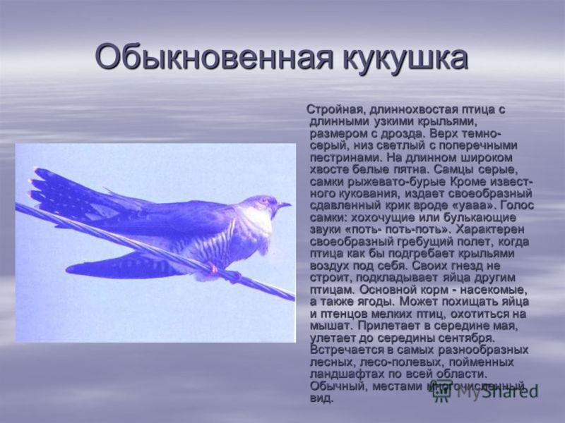 Обыкновенная кукушка Стройная, длиннохвостая птица с длинными узкими крыльями, размером с дрозда. Верх темно- серый, низ светлый с поперечными пестринами. На длинном широком хвосте белые пятна. Самцы серые, самки рыжевато-бурые Кроме извест ного ку
