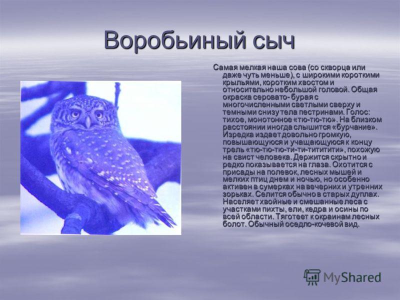 Воробьиный сыч Самая мелкая наша сова (со скворца или даже чуть меньше), с широкими короткими крыльями, коротким хвостом и относительно небольшой головой. Общая окраска серовато- бурая с многочисленными светлыми сверху и темными снизу тела пестринам