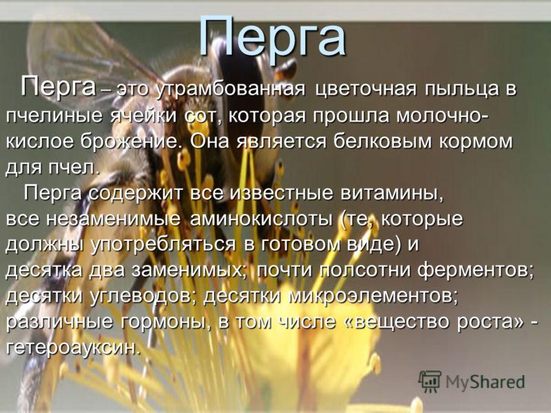 Перга Перга – это утрамбованная цветочная пыльца в Перга – это утрамбованная цветочная пыльца в пчелиные ячейки сот, которая прошла молочно- кислое брожение. Она является белковым кормом для пчел. Перга содержит все известные витамины, Перга содержит
