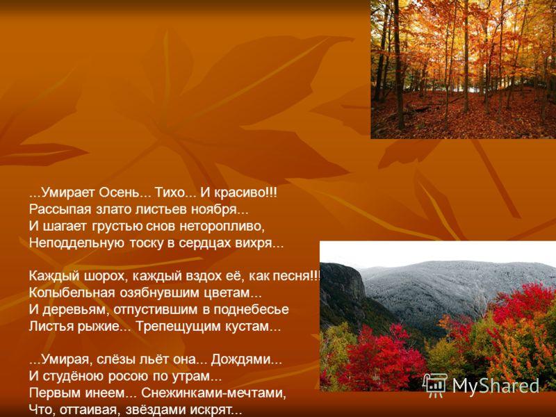 ...Умирает Осень... Тихо... И красиво!!! Рассыпая злато листьев ноября... И шагает грустью снов неторопливо, Неподдельную тоску в сердцах вихря... Каждый шорох, каждый вздох её, как песня!!! Колыбельная озябнувшим цветам... И деревьям, отпустившим в