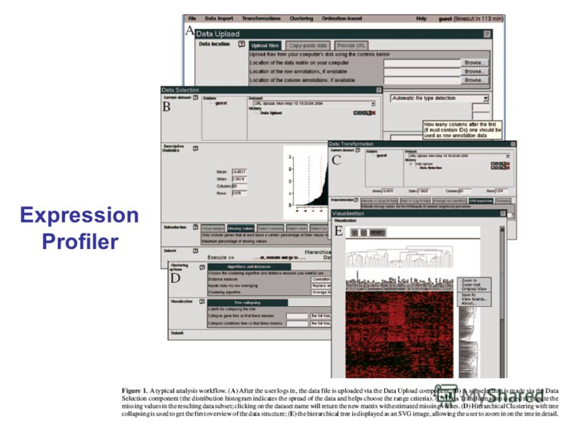 Expression Profiler