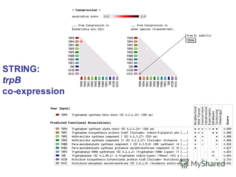 STRING: trpB co-expression