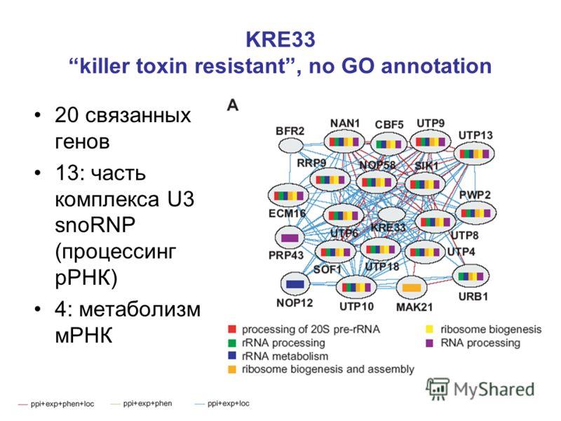 KRE33 killer toxin resistant, no GO annotation 20 связанных генов 13: часть комплекса U3 snoRNP (процессинг рРНК) 4: метаболизм мРНК