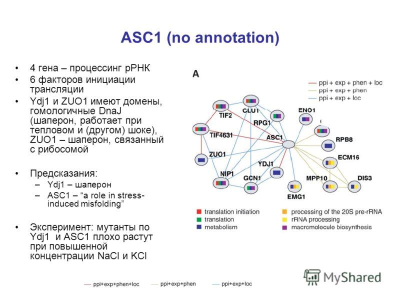 ASC1 (no annotation) 4 гена – процессинг рРНК 6 факторов инициации трансляции Ydj1 и ZUO1 имеют домены, гомологичные DnaJ (шаперон, работает при тепловом и (другом) шоке), ZUO1 – шаперон, связанный с рибосомой Предсказания: –Ydj1 – шаперон –ASC1 – a