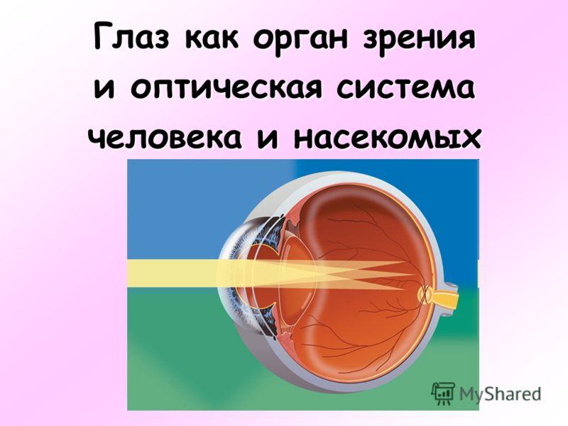 Глаз как орган зрения и оптическая система человека и насекомых