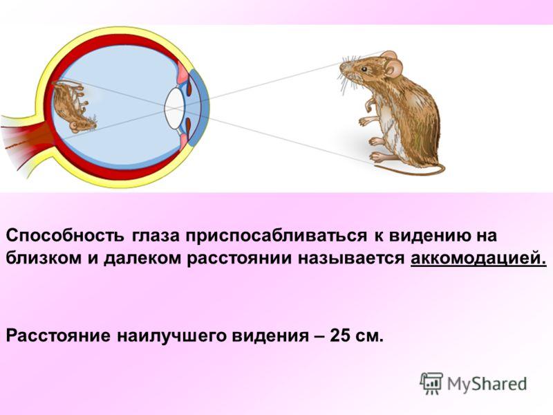 Способность глаза приспосабливаться к видению на близком и далеком расстоянии называется аккомодацией. Расстояние наилучшего видения – 25 см.