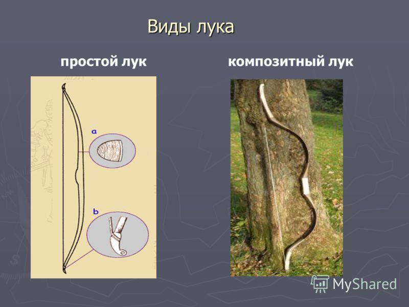 Виды лука композитный лукпростой лук