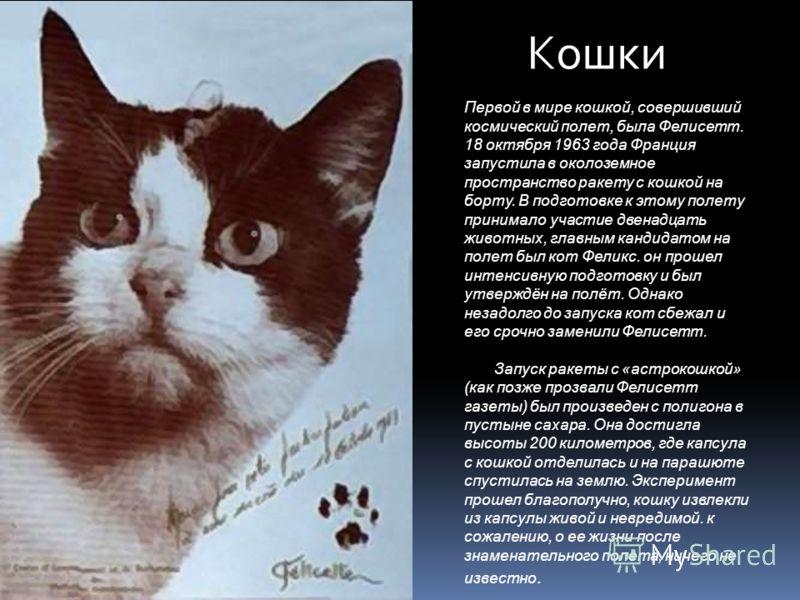 Кошки Первой в мире кошкой, совершивший космический полет, была Фелисетт. 18 октября 1963 года Франция запустила в околоземное пространство ракету с кошкой на борту. В подготовке к этому полету принимало участие двенадцать животных, главным кандидато