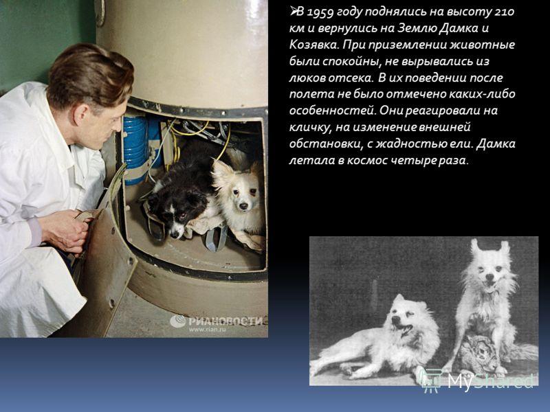 В 1959 году поднялись на высоту 210 км и вернулись на Землю Дамка и Козявка. При приземлении животные были спокойны, не вырывались из люков отсека. В их поведении после полета не было отмечено каких-либо особенностей. Они реагировали на кличку, на из