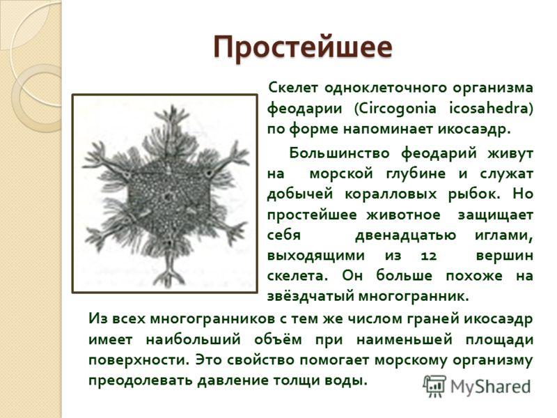Простейшее Скелет одноклеточного организма феодарии (Circogonia icosahedra) по форме напоминает икосаэдр. Большинство феодарий живут на морской глубине и служат добычей коралловых рыбок. Но простейшее животное защищает себя двенадцатью иглами, выходя