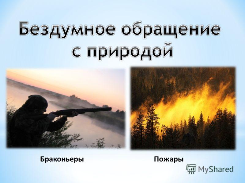 БраконьерыПожары