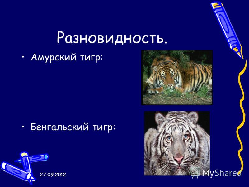 27.09.2012 Разновидность. Амурский тигр: Бенгальский тигр: