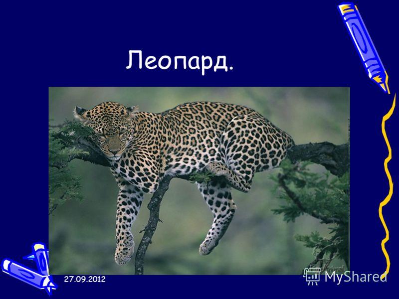 27.09.2012 Леопард.