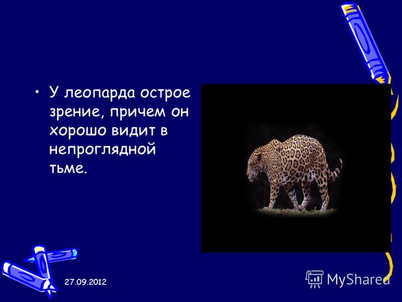 27.09.2012 У леопарда острое зрение, причем он хорошо видит в непроглядной тьме.