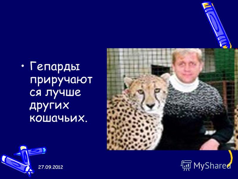 27.09.2012 Гепарды приручают ся лучше других кошачьих.