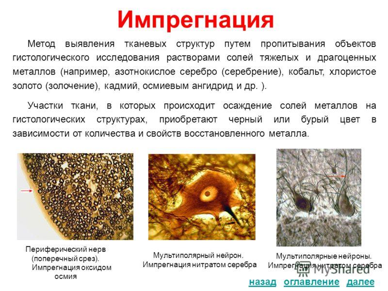 Импрегнация назад Метод выявления тканевых структур путем пропитывания объектов гистологического исследования растворами солей тяжелых и драгоценных металлов (например, азотнокислое серебро (серебрение), кобальт, хлористое золото (золочение), кадмий,