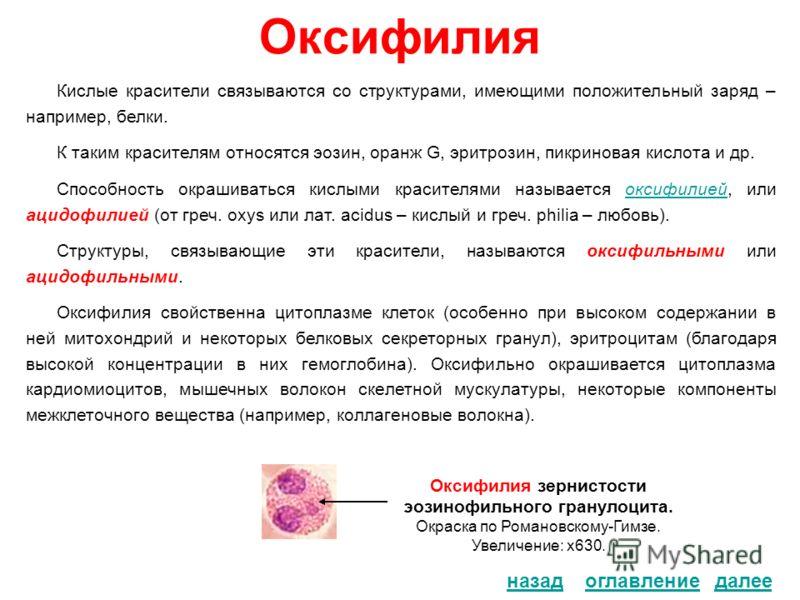 Оксифилия Кислые красители связываются со структурами, имеющими положительный заряд – например, белки. К таким красителям относятся эозин, оранж G, эритрозин, пикриновая кислота и др. Способность окрашиваться кислыми красителями называется оксифилией