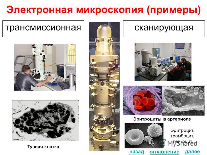 Электронная микроскопия (примеры) трансмиссионнаясканирующая Тучная клетка назад Эритроциты в артериоле...... Эритроцит, тромбоцит, лейкоцит оглавление далее