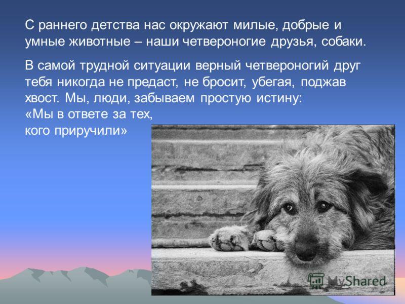 С раннего детства нас окружают милые, добрые и умные животные – наши четвероногие друзья, собаки. В самой трудной ситуации верный четвероногий друг тебя никогда не предаст, не бросит, убегая, поджав хвост. Мы, люди, забываем простую истину: «Мы в отв