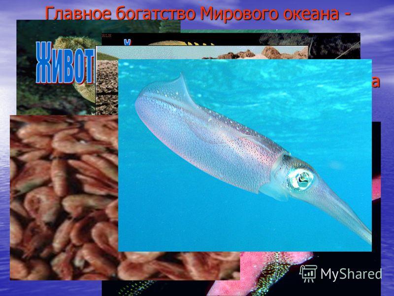Главное богатство Мирового океана - это его биологические ресурсы. Биомасса Океана насчитывает 150 тыс. видов животных и 10 тыс. водорослей, а её общий объём оценивается в 35 миллиардов тонн, чего вполне может хватить, чтобы прокормить 30 миллиардов!