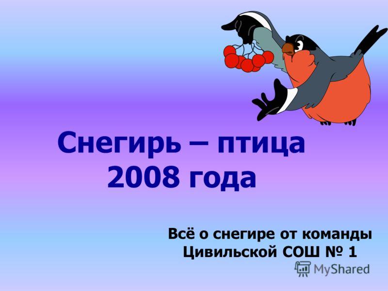 Снегирь – птица 2008 года Всё о снегире от команды Цивильской СОШ 1