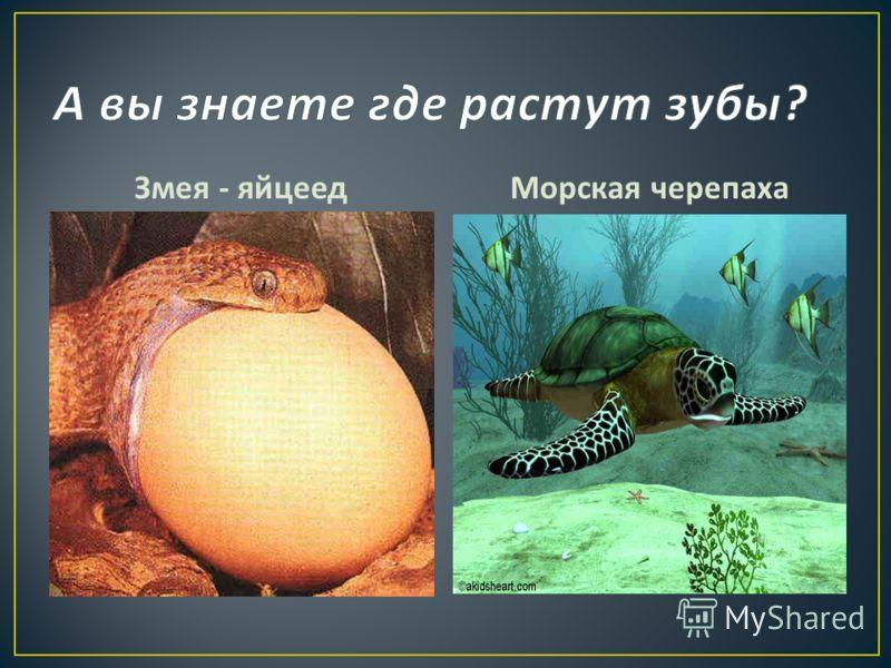Змея - яйцеедМорская черепаха