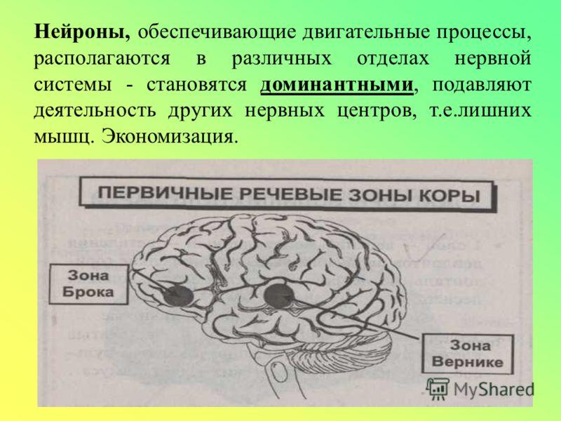 Нейроны, обеспечивающие двигательные процессы, располагаются в различных отделах нервной системы - становятся доминантными, подавляют деятельность других нервных центров, т.е.лишних мышц. Экономизация.