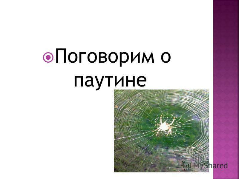 Поговорим о паутине