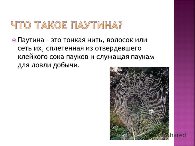 Паутина – это тонкая нить, волосок или сеть их, сплетенная из отвердевшего клейкого сока пауков и служащая паукам для ловли добычи.