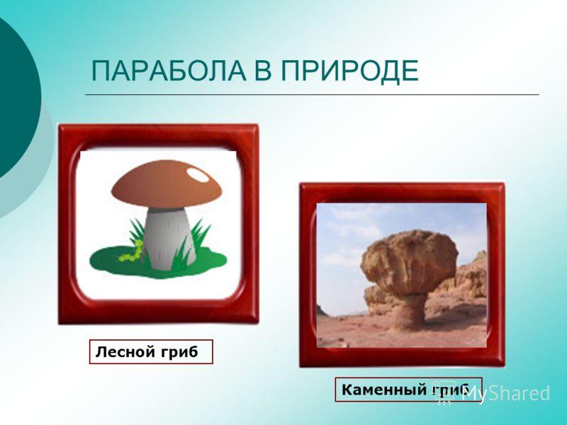 ПАРАБОЛА В ПРИРОДЕ Лесной гриб Каменный гриб