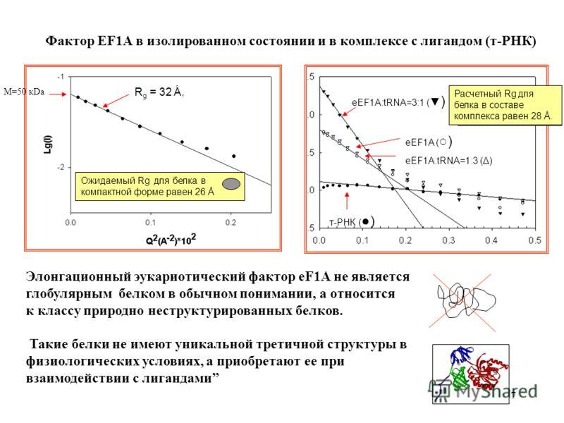 7 R g = 32 Å, Oжидаемый Rg для белка в компактной форме равен 26 Å т-РНК ( ) eEF1A:tRNA=3:1 ( ) eEF1A ( ) eEF1A:tRNA=1:3 (Δ) Расчетный Rg для белка в составе комплекса равен 28 Å. Элонгационный эукариотический фактор eF1A не являeтся глобулярным белк