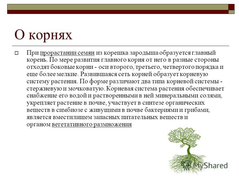 О корнях При прорастании семян из корешка зародыша образуется главный корень. По мере развития главного корня от него в разные стороны отходят боковые корни - оси второго, третьего, четвертого порядка и еще более мелкие. Развившаяся сеть корней образ