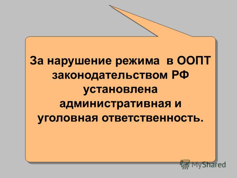 За нарушение режима в ООПТ законодательством РФ установлена административная и уголовная ответственность.