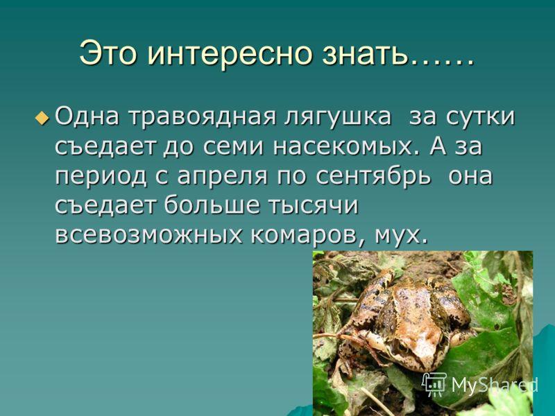 Это интересно знать…… Одна травоядная лягушка за сутки съедает до семи насекомых. А за период с апреля по сентябрь она съедает больше тысячи всевозможных комаров, мух. Одна травоядная лягушка за сутки съедает до семи насекомых. А за период с апреля п
