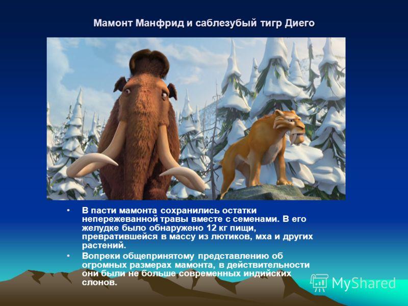 Мамонт Манфрид и саблезубый тигр Диего В пасти мамонта сохранились остатки непережеванной травы вместе с семенами. В его желудке было обнаружено 12 кг пищи, превратившейся в массу из лютиков, мха и других растений. Вопреки общепринятому представлени