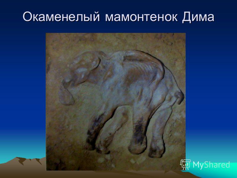 Окаменелый мамонтенок Дима